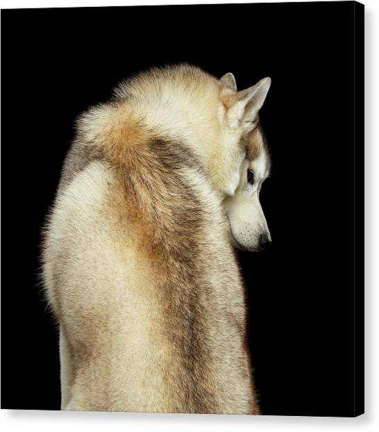 Wolf In Soul Canvas Print