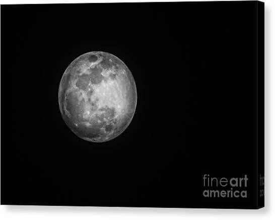 Wolf Moon Canvas Print - Wolf Moon 2018 by Robert Bales