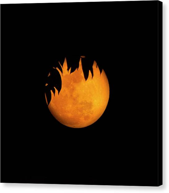 Wolf Moon Canvas Print - Wolf Moon by Mark Andrew Thomas