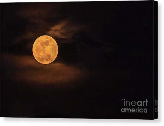 Wolf Moon Canvas Print - Wolf Moon by Robert Bales
