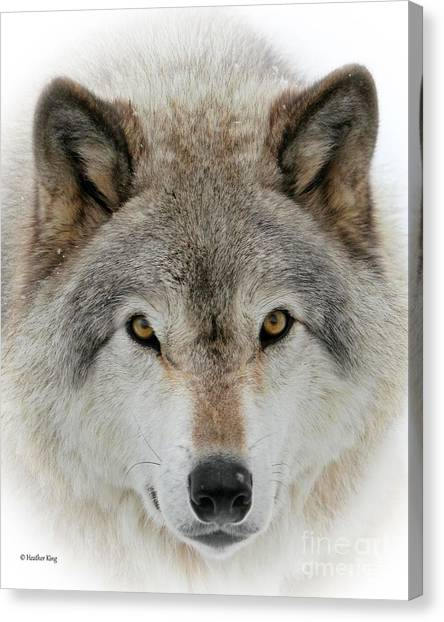 Arctic Wolf Canvas Print - Wolf Portrait by Heather King