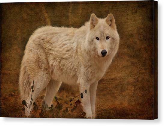 Arctic Wolf Canvas Print - Wolf by Sandy Keeton