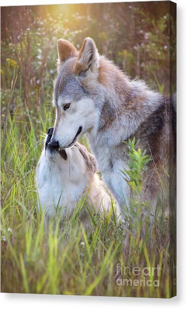 Wolf Soul Mates Canvas Print