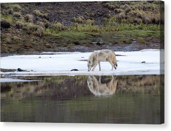 Wolflection Canvas Print