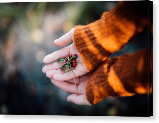 Outdoors Canvas Print - Woman Hands Holding Cranberries by Aldona Pivoriene