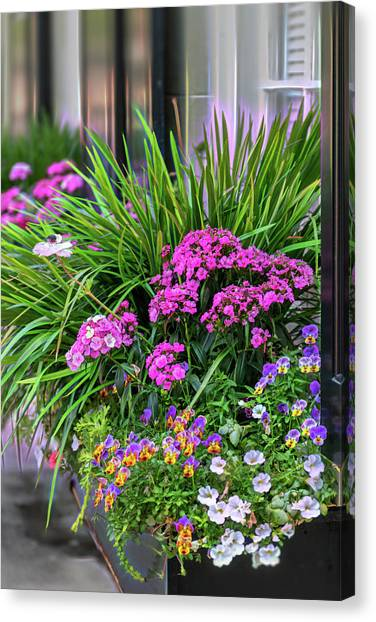 Wonderful Window Boxes Of Charleston Canvas Print