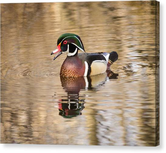 Wood Duck With Reflection Canvas Print
