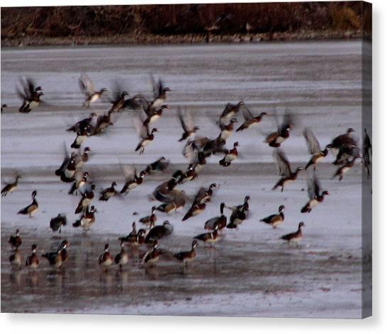 Wood Ducks Canvas Print by Athena Ellis