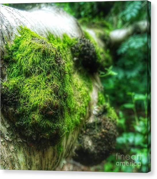 Forests Canvas Print - #wood #tree #forest #nature by Abbie Shores