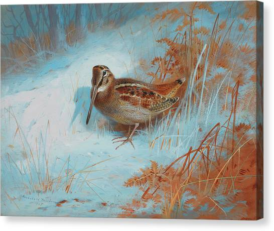 Woodcock Canvas Print - A Woodcock In The Snow by Archibald Thorburn