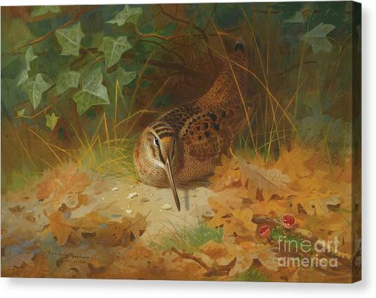 Woodcocks Canvas Print - Woodcock by Celestial Images