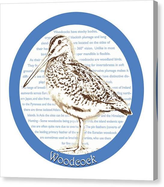 Woodcock Canvas Print - Woodcock by Greg Joens