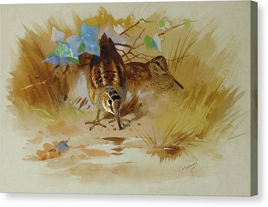 Woodcocks Canvas Print - Woodcock In A Sandy Hollow By Thorburn by Archibald Thorburn