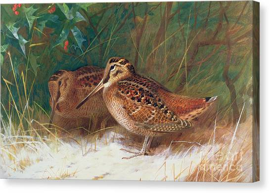 Woodcock Canvas Print - Woodcock In The Undergrowth by Archibald Thorburn