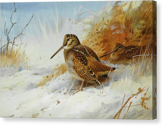 Woodcocks Canvas Print - Woodcock In Winter By Thorburn by Archibald Thorburn