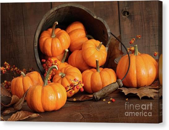 Thanksgiving Canvas Print - Wooden Bucket Filled With Tiny Pumpkins by Sandra Cunningham