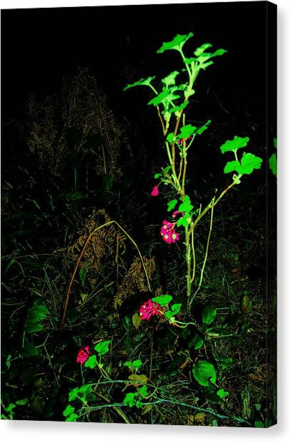 Woodland Bush Canvas Print by Mel Crist