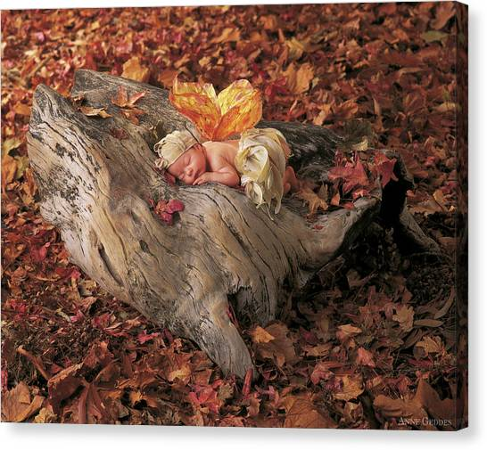 Fairies Canvas Print - Woodland Fairy by Anne Geddes