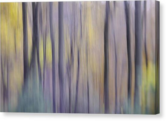 Canvas Print featuring the photograph Woodland Hues by Bernhart Hochleitner