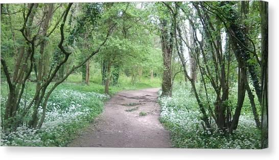 Woodland Path 1 Canvas Print