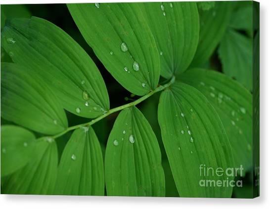 Woodland Rain Canvas Print