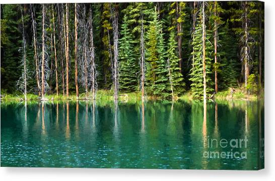 Woodland Reflections Canvas Print