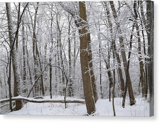 Hailstorms Canvas Print - Woodland Snow by Douglas Sacha