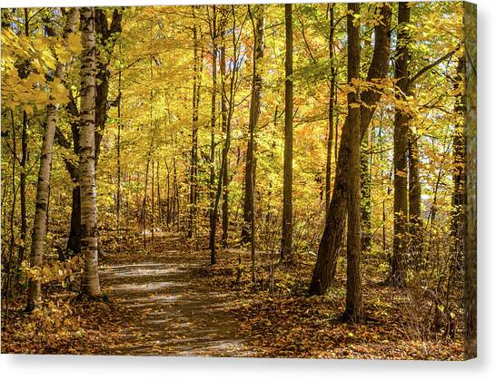 Canvas Print featuring the photograph Woodland Trail At Mer Bleue by Rob Huntley