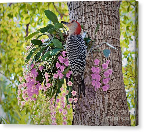 Woodpecker Heaven Canvas Print