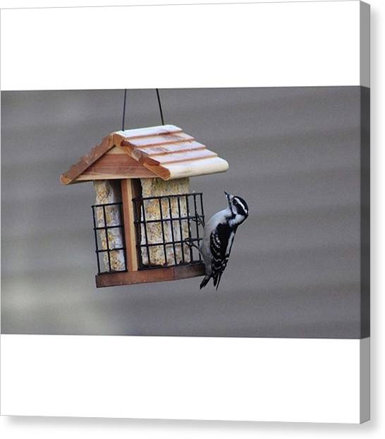 Woodpeckers Canvas Print - Woodpecker Was Going To Town On It! It by Bryan Edwards