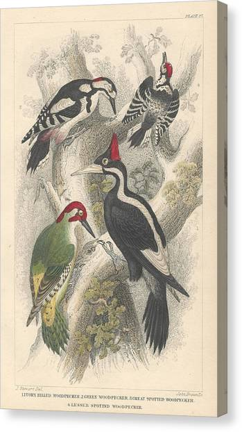 Earth Canvas Print - Woodpeckers by Dreyer Wildlife Print Collections