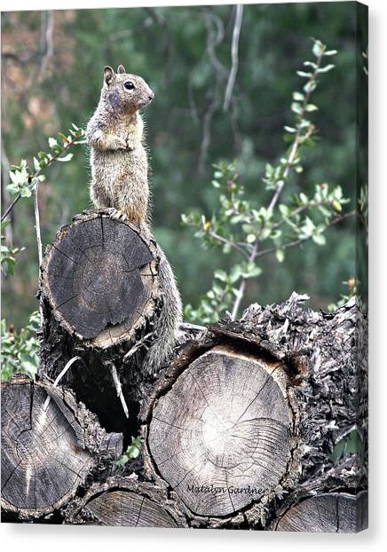 Woodpile Squirrel Canvas Print