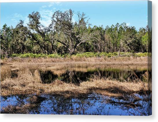 Starkey Canvas Print - Woods And Wetlands 1 by John Trommer