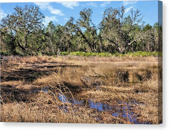 Starkey Canvas Print - Woods And Wetlands 2 by John Trommer