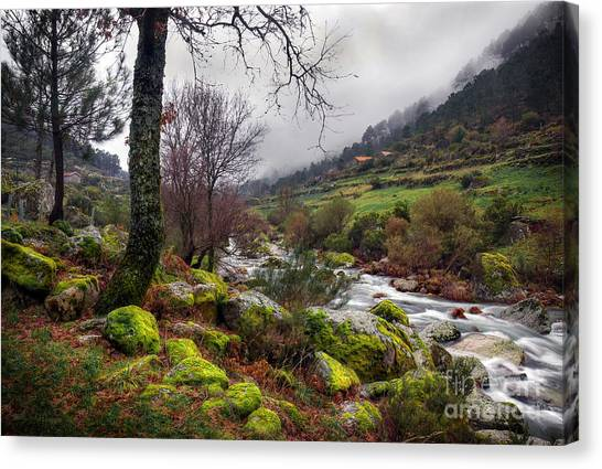 Woods Landscape Canvas Print