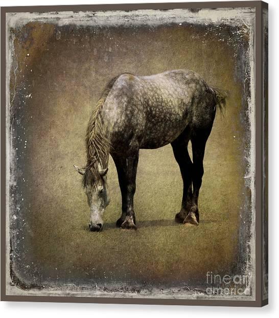 Draft Horses Canvas Print - Working Horse by Sari Sauls
