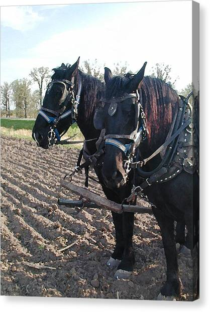 Working Percherons Canvas Print by Laurie With