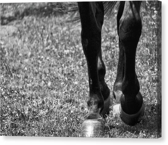 Working Trot Canvas Print by JAMART Photography