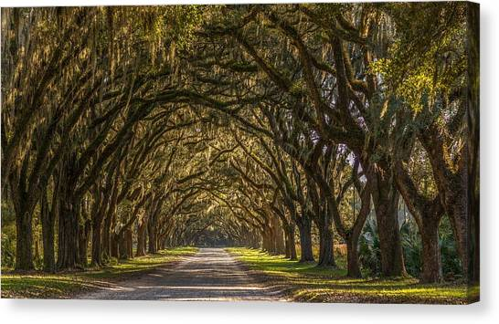 Wormsloe Historic Site Canvas Print