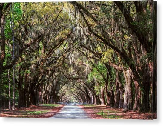 Wormsloe Plantation Oaks Canvas Print