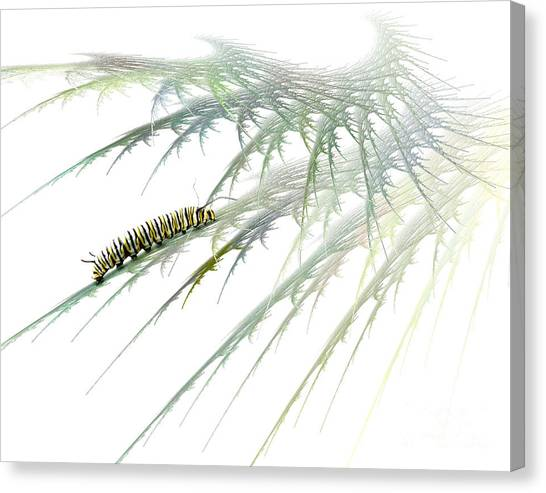 Bug Canvas Print - Wormwood by Jan Piller