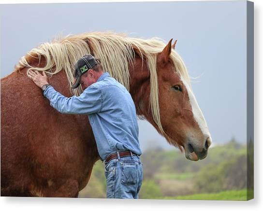 Wrangler Jeans And Belgian Horse Canvas Print
