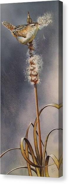 Wren And Cattails Canvas Print
