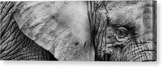 Wrinkles Canvas Print