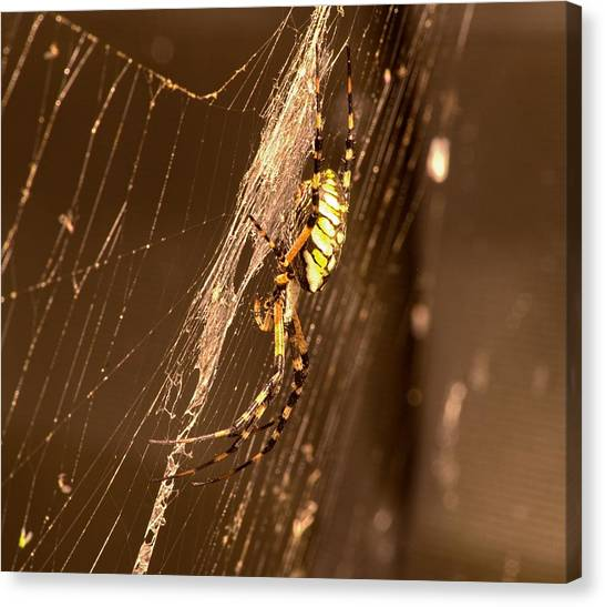 Writing Spider Canvas Print