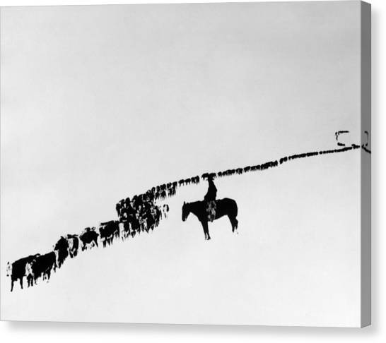 Horse Canvas Print - Wyoming: Cattle, C1920 by Granger