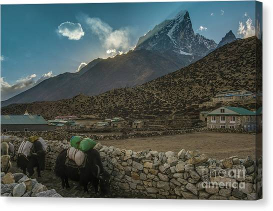 K2 Canvas Print - Yaks Moving Through Dingboche by Mike Reid