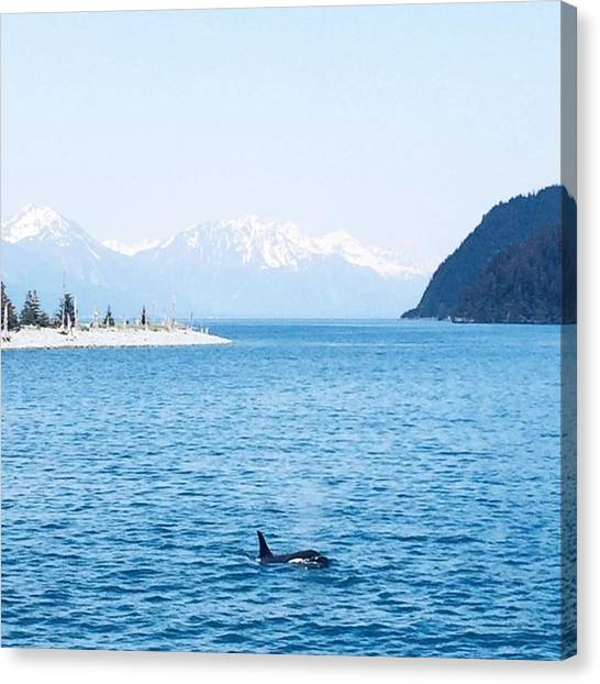 Orcas Canvas Print - Yall My Dream Of Seeing An Orca In The by Kristen Holbrook