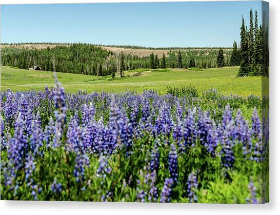 Yard Full Of Wildflowers Canvas Print
