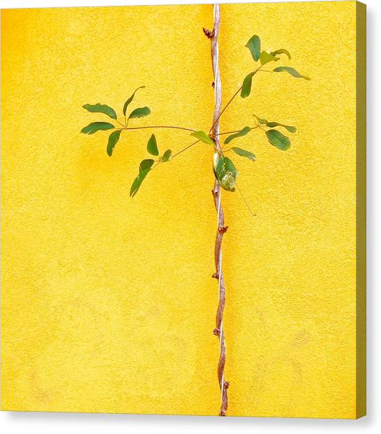 Canvas Print - Yellow #2 by Julie Gebhardt